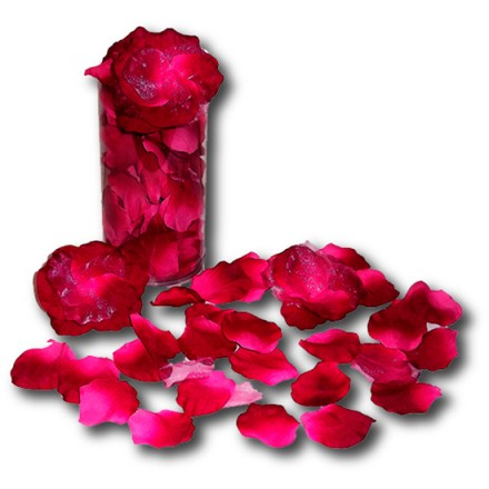 petalos de rosa fucsia